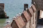 Möwenrast auf den alten Burgmauern in Sirmione / Чайки отдыхают на старых крепостных стенах в Сирмионе