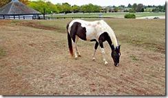 KY horse park 021