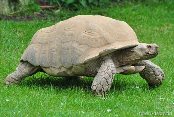 Ciri khusus kura-kura