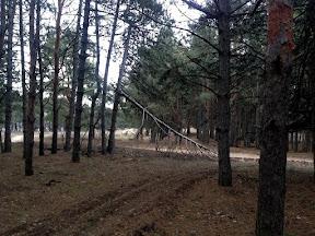 лес13.jpg