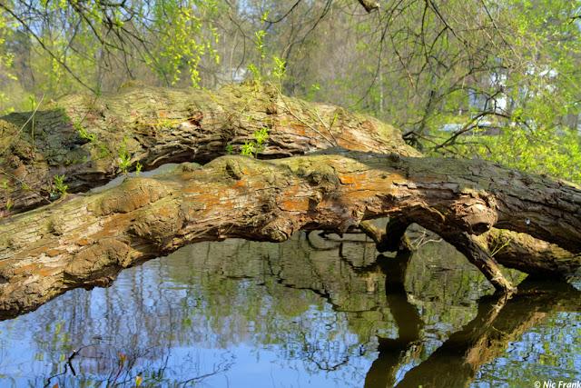 Am Waldsee, Berlin-Hermsdorf