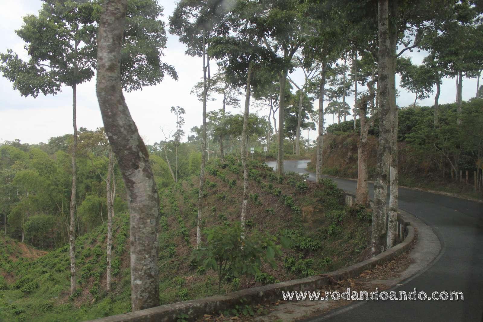 Visita a filandia y el valle de cocora for Plantaciones verticales