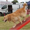 Pet Dogs 2015