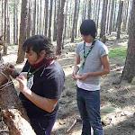 Desmontando la casa del árbol