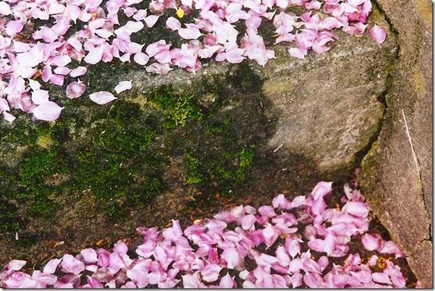 CrabappleBlossoms1
