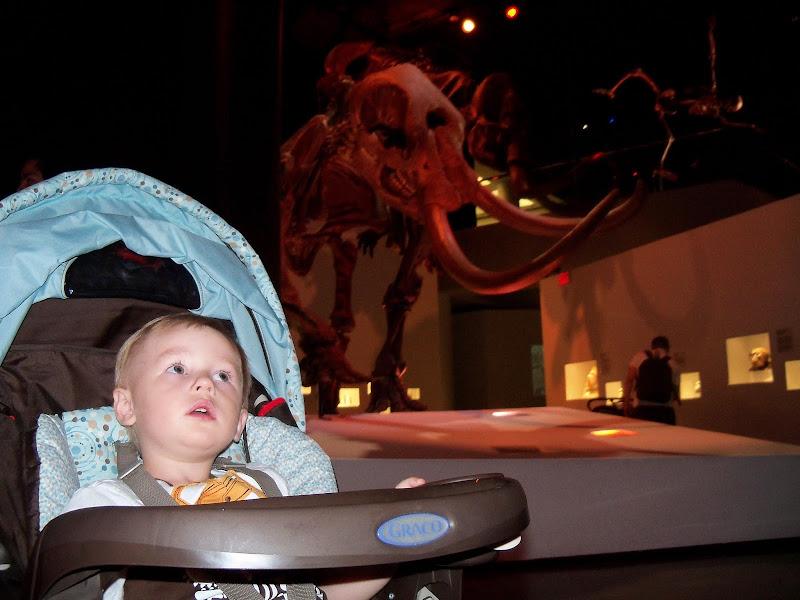 Houston Museum of Natural Science - 116_2650.JPG