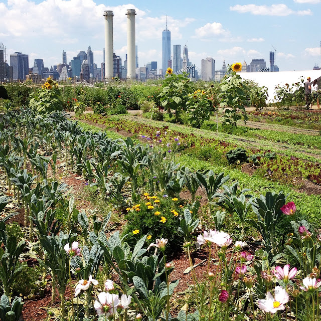 Urban rooftop farming at the Brooklyn Grange with New York skyline views