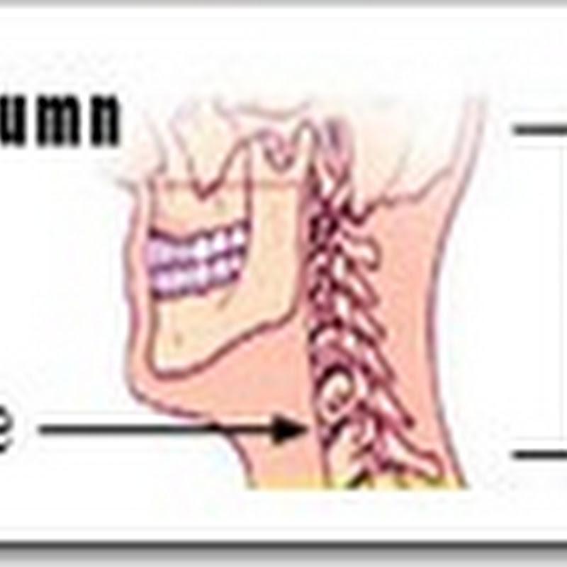 Acidentes ósseos vertebras