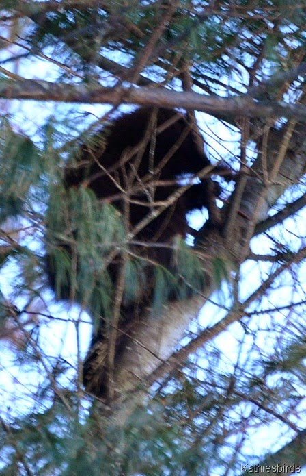 2. porcupine on mere point-kab