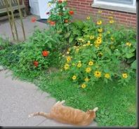 Flower garden ...clear