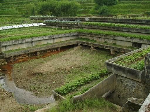 Agatho Organic Farm