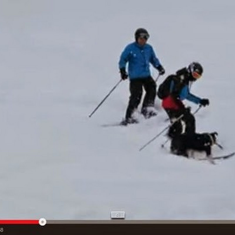 Σκύλος σταματά δυο σκιέρ