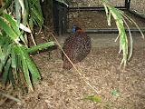 A bird at the Nashville Zoo 09032011