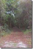 Trail view through trees-1