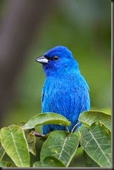 Bright Blue Bird!