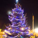 Cornelius Tree 008.jpg
