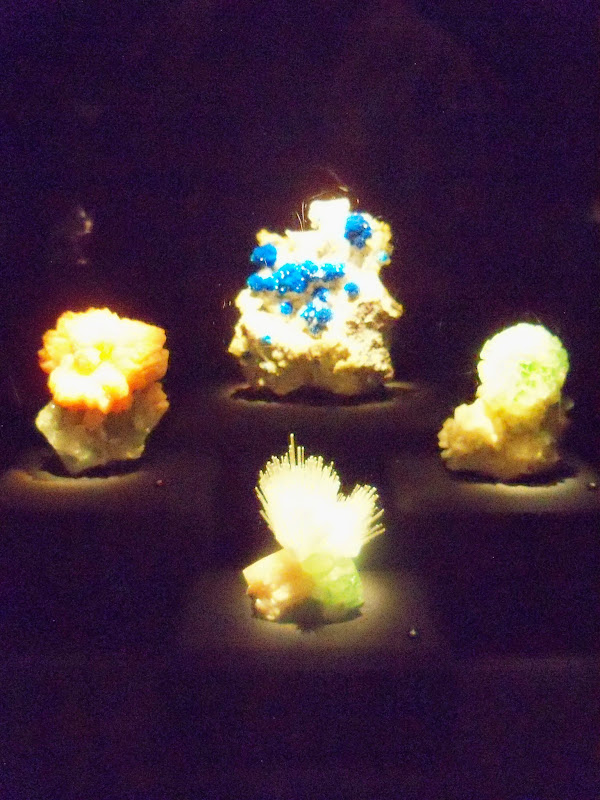 Houston Museum of Natural Science - 116_2798.JPG