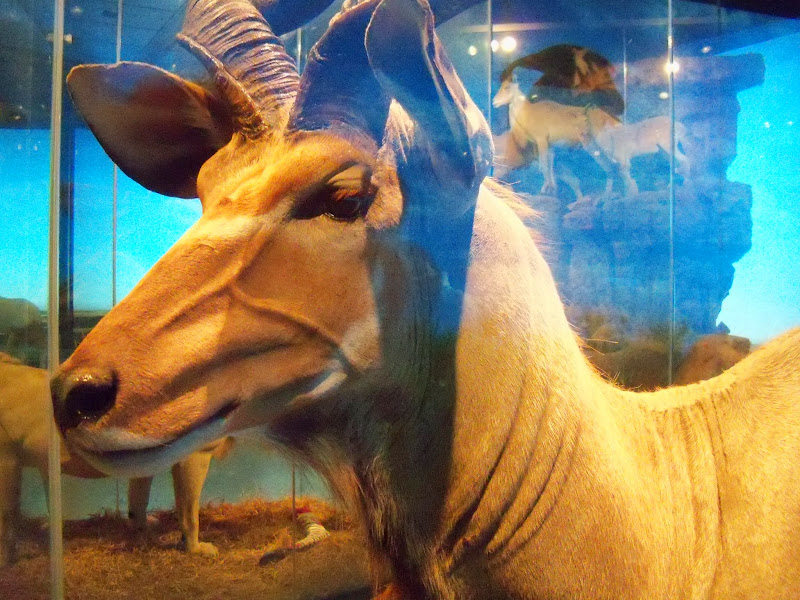 Houston Museum of Natural Science - 116_2827.JPG