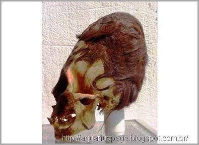 cranios-alongados-paracas