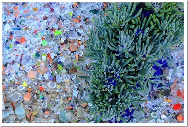 150926_SucculentExtravaganza_077