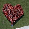 serce 1.jpg