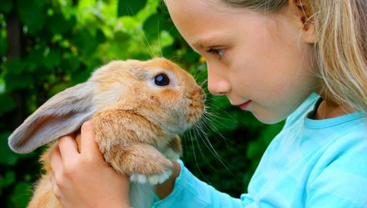 rabbit-berns-45833863(2)