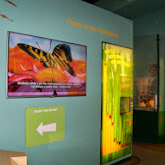 Houston Museum of Natural Science - 116_2848.JPG