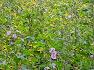 Bloemenweides voor bijen