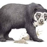 Este é o urso que queríamos ver - Parque Podocarpus - Vilcabamba, Equador