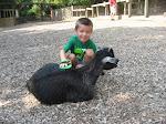 Bryan brushing a goat at the Nashville Zoo 09032011b