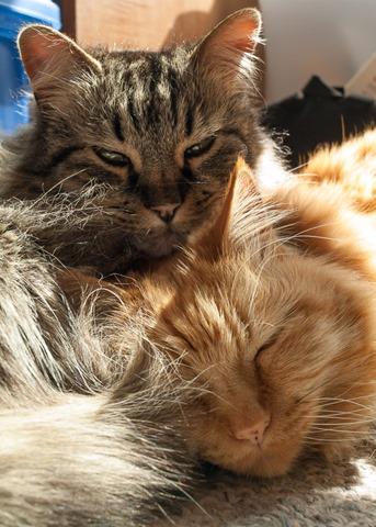 Cuddling in a sunbeam