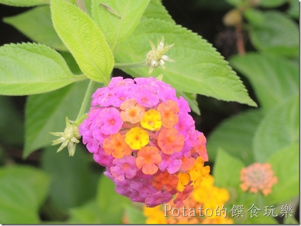 菁寮國小的蝴蝶園1