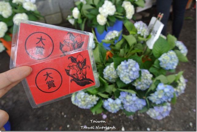 陽明山繡球花 (79)