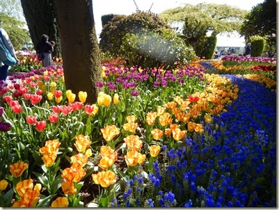 4-17 Tulips 37