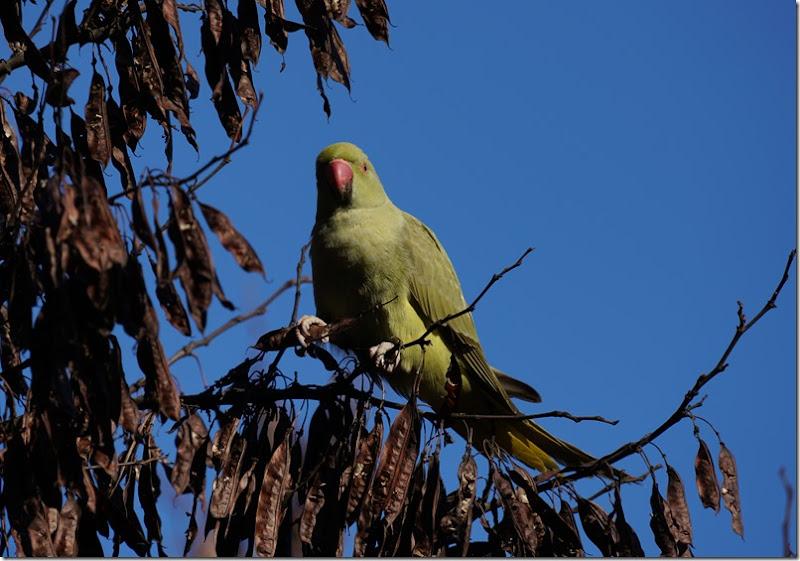 paris parrot 112215 00011