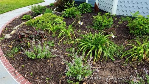 hydrangea, daylilies, catmint