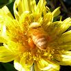 Pollen Sacks Full.jpg