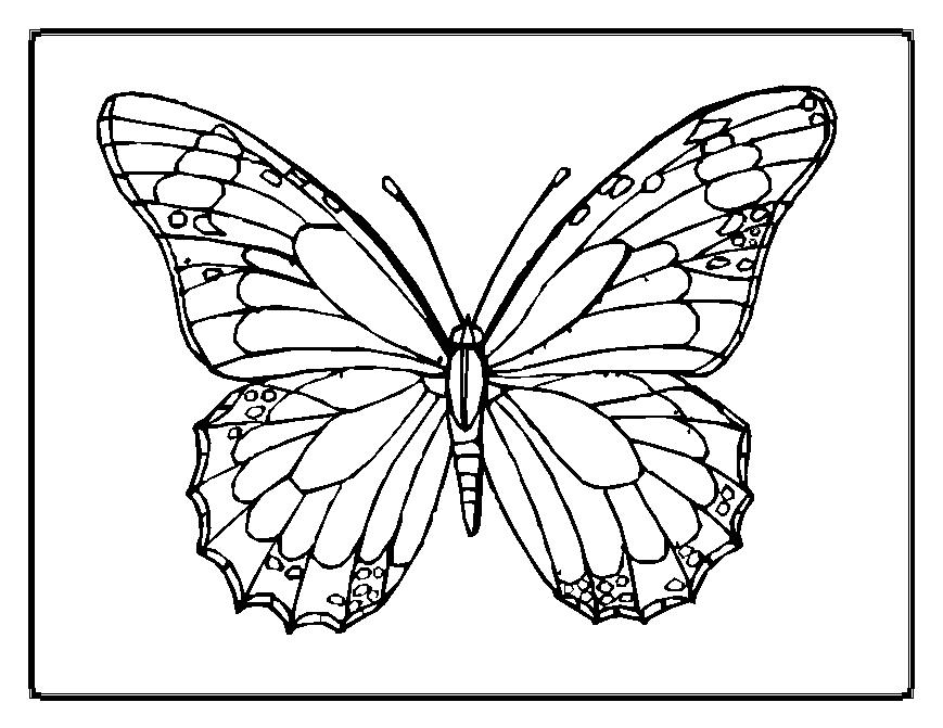 BUTTERFLY coloring pages Gulf Butterfly Hellokids  - butterfly coloring sheets