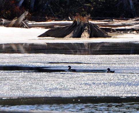 13. wood ducks-kab