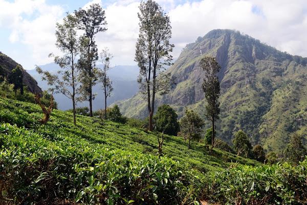 Чайные плантации и горы, Элла, Шри Ланка