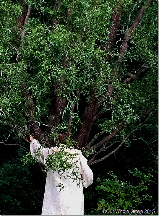 Ritual portal posture,Tree