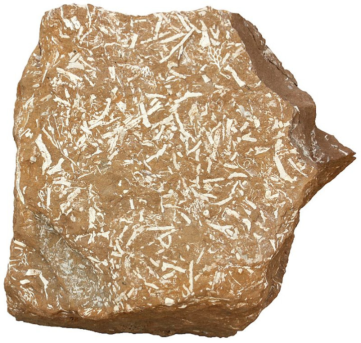 Oil Shale Sedimentary Rocks