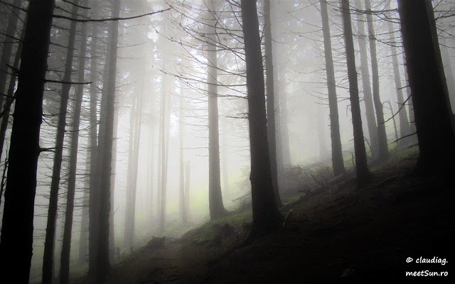 Piatra-Craiului-Nordica-6831.jpg
