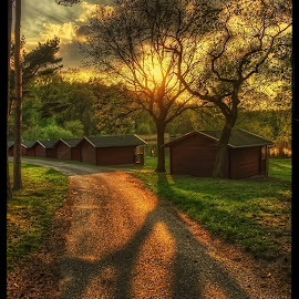 Sun in branches by Petr Klingr - Landscapes Sunsets & Sunrises ( tree, hdr, shadow, sunset )