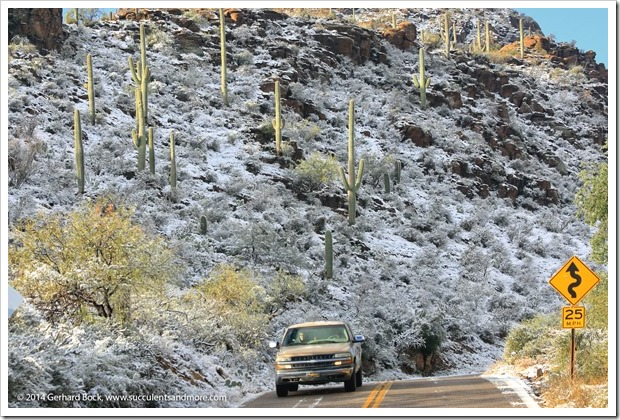 150101_TucsonMtPark_0057