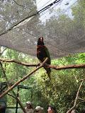 A lorikeet at the Nashville Zoo 09032011b
