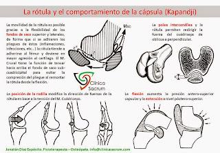 La Rótula y el comportamiento de la Cápsula (Kapandji)