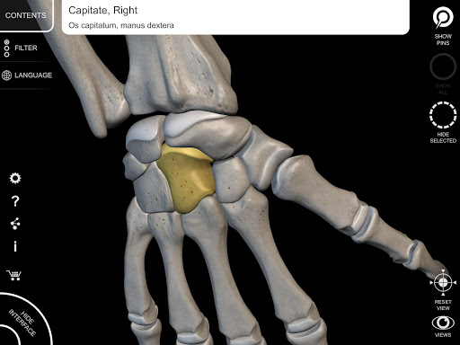 Skeletal System - 3D Anatomy - screenshot
