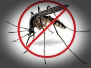 Cara menanggulangi gangguan nyamuk