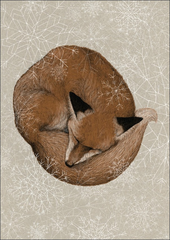 Eva Dahvmandàsz - Sleepy fox